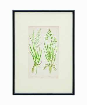 BOTANICAL GRASS_02