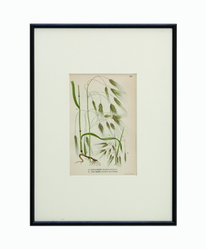 BOTANICAL GRASS_04