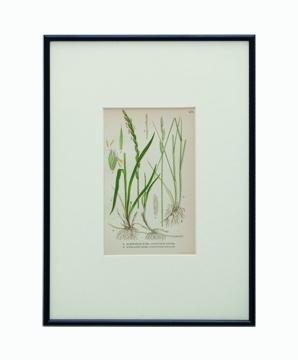 BOTANICAL GRASS_07