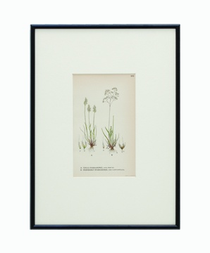BOTANICAL GRASS_08