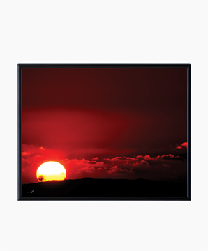 TAL PAZ-FRIDMAN